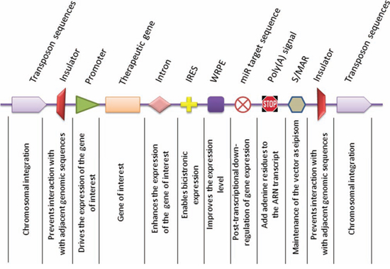 Representative components of gene delivery vectors.
