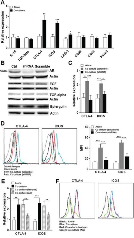 HCC cells alter Treg phenotype through AR.