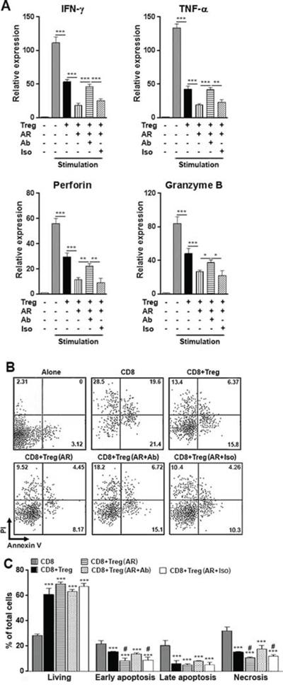 AR promotes Treg activity to suppress anti-tumor immunity in vitro.