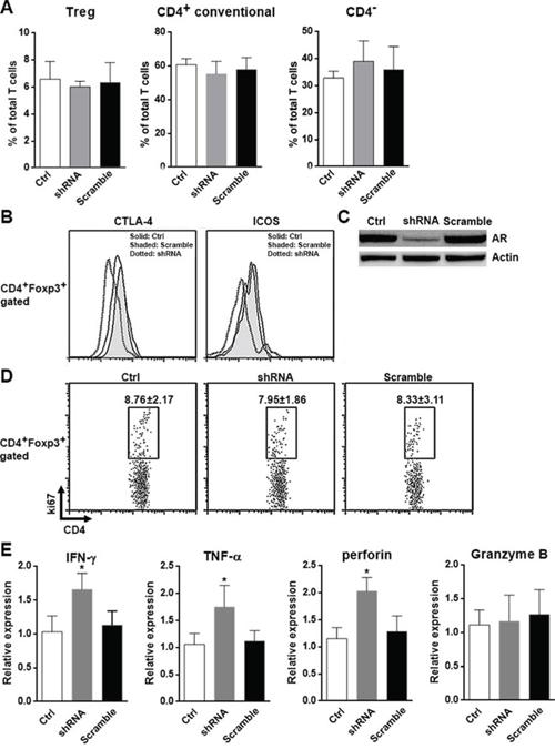 AR suppresses anti-tumor activity of CD8+ T cells in vivo.