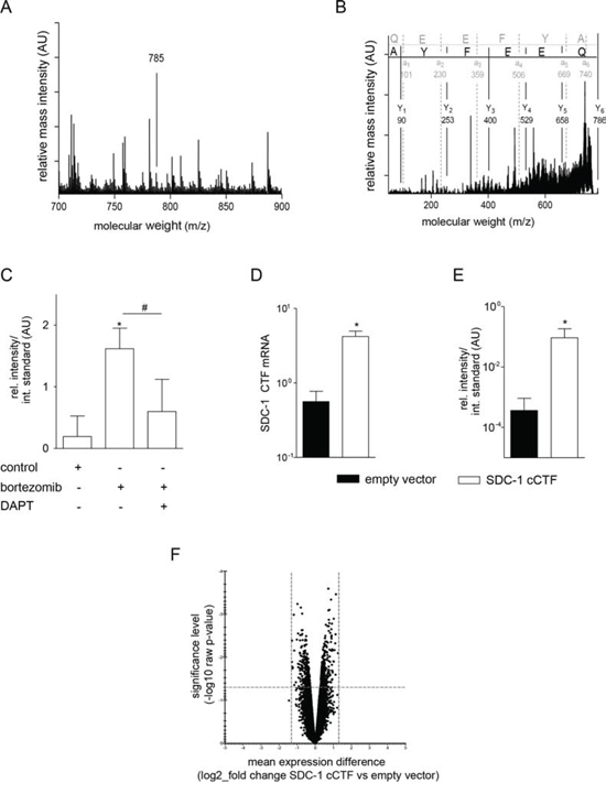 The syndecan-1 cCTF does not affect gene transcription.
