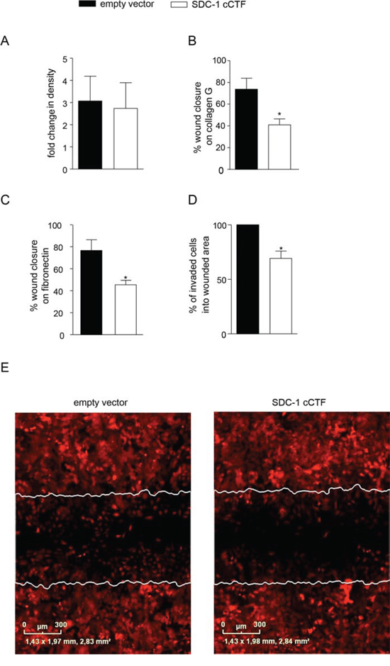 Overexpression of syndecan-1 cCTF blocks cell migration and invasion.