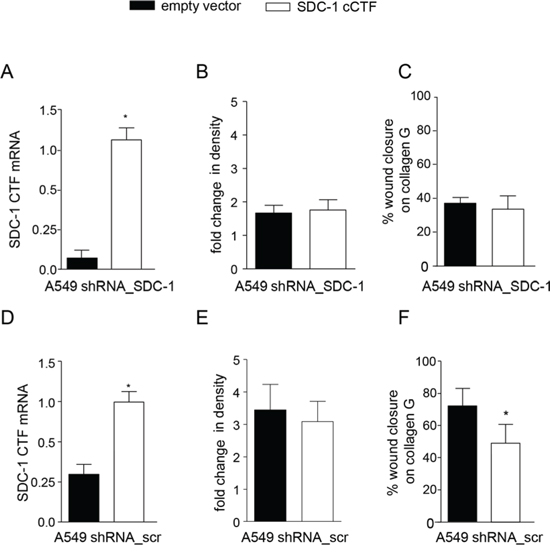 Syndecan-1 cCTF cannot suppress cell migration of syndecan-1 deficient cells.