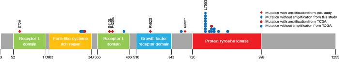 Gene map of ERBB2 mutations.