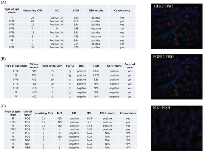 Validation of nanostring CNV 21-gene assay.