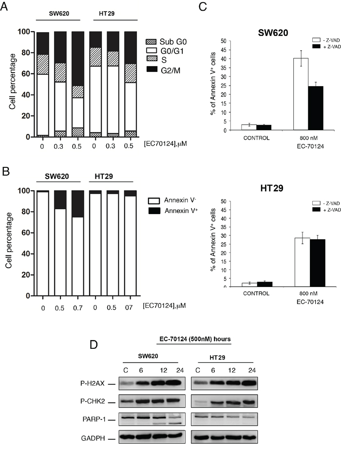 Effect of EC-70124 on cell cycle and induction of apoptosis.