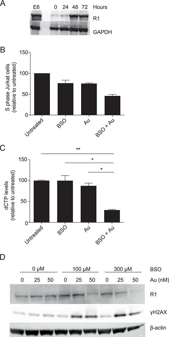 Inhibition of GSH and Trx impairs dNTP production and induces γH2AX.