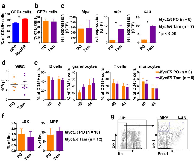 Conditional Myc activation results in target gene expression