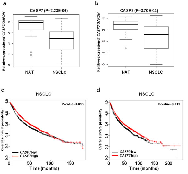 The expressions of CASP3 and CASP7 mRNA are down regulated in NSCLC.