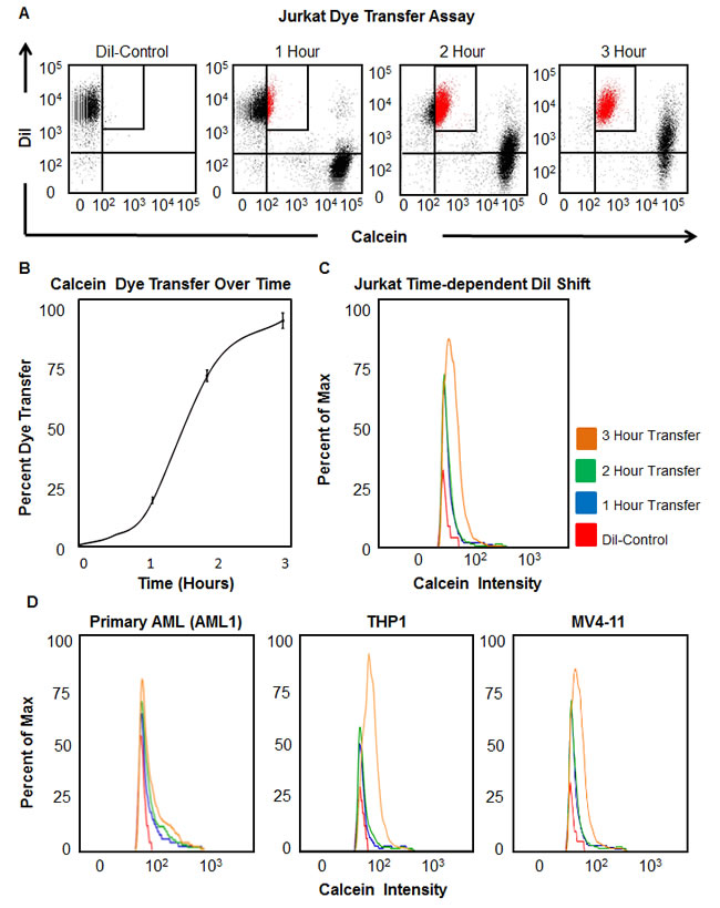 Functional gap junction activity is detectable directly between leukemia cells.