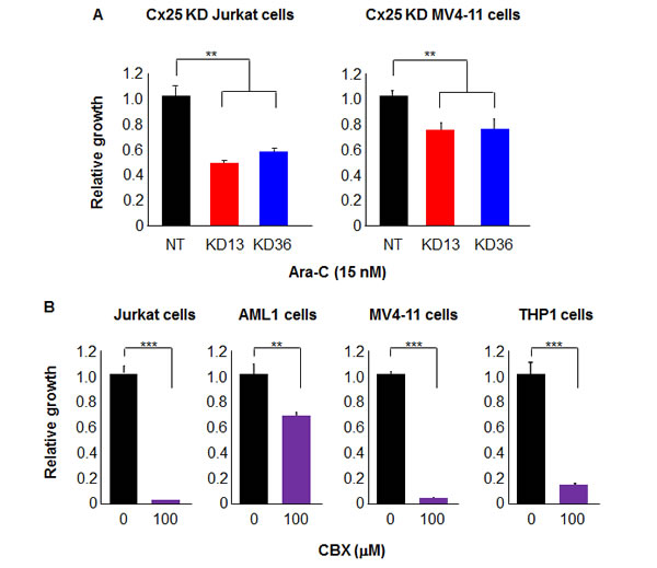 Cx25 KD increases leukemia cell chemosensitivity, while treatment with a gap junction inhibitor decreases leukemia cell proliferation.