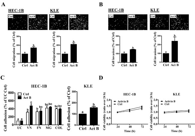 Activin B increases endometrial cancer cell migration, invasion and adhesion.