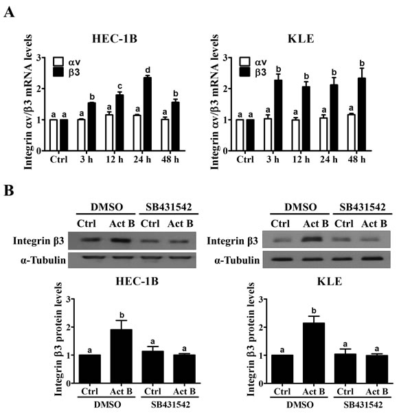 Activin B up-regulates integrin β3 expression in endometrial cancer cells.