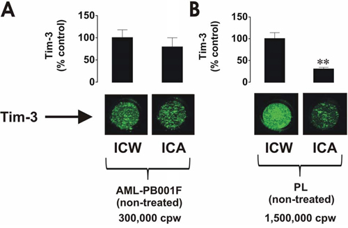 Comparative analysis of Tim-3 expression and surface presence in primary human AML cells and healthy leukocytes.