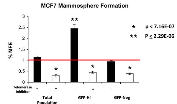 hTERT-eGFP-high MCF7 cells form mammospheres more efficiently, in a telomerase-dependent manner.