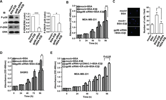 gp96 depletion reduces MAPK signaling and inhibits the growth and invasion of breast cancer cells.