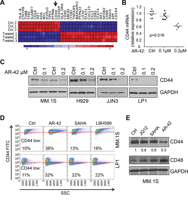 AR-42 treatment induces CD44 downregulation in multiple myeloma cell lines.