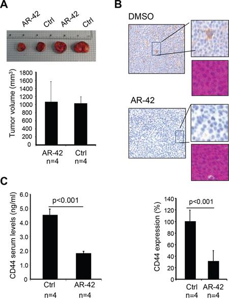 AR-42 decreases CD44 expression in vivo.