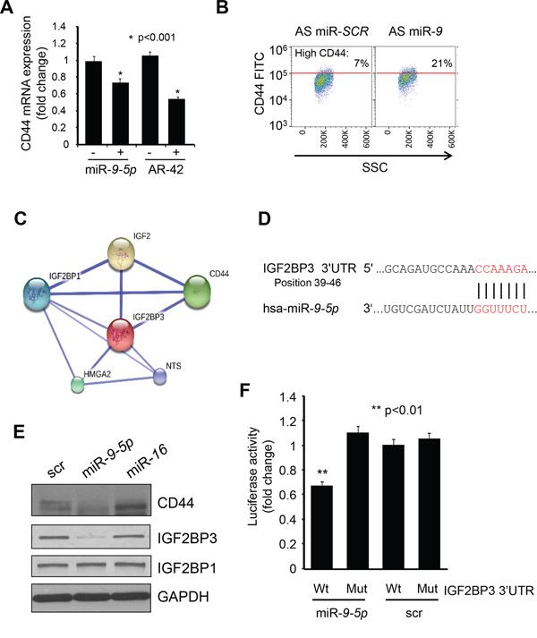 IGF2BP3 is the direct target of miR-9-5p.