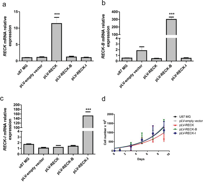 Validation of RECK variants over-expression and their effects in cellular growth rate.