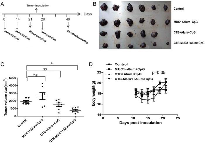 Tumor protective efficacy of CTB-MUC1 on MUC1+B16 melanoma-bearing mice.