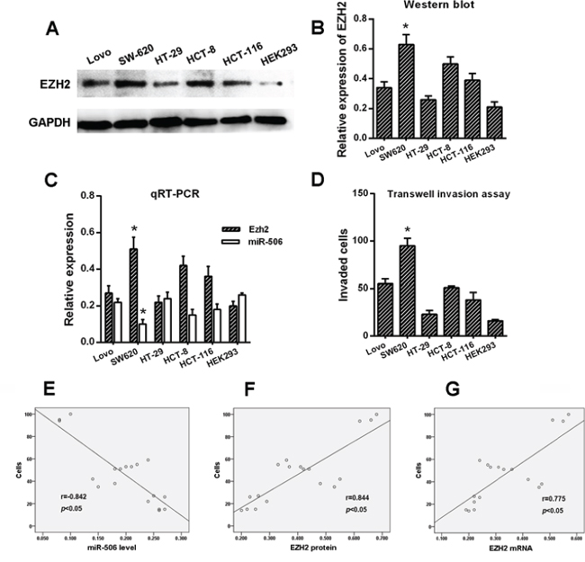 Correlation of miR-506 and EZH2 expression with the invasiveness of colon cancer cell lines.