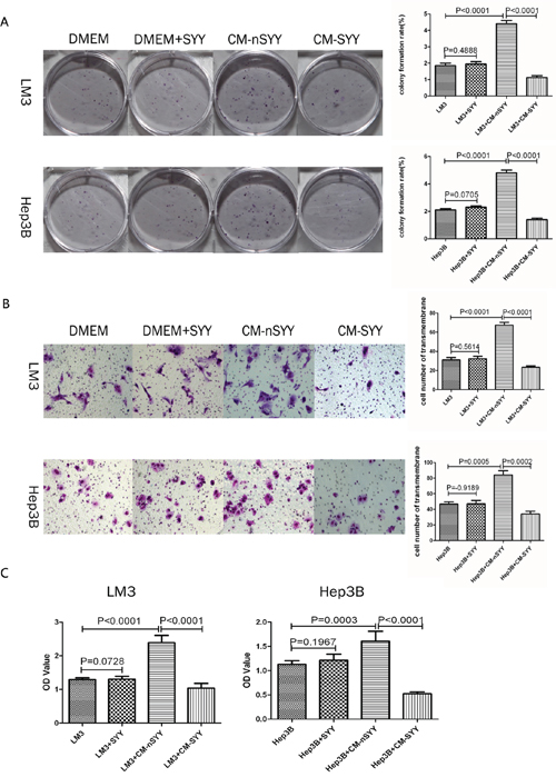 Clonogenic capacity of LM3 and Hep3B cells was enhanced after treatment with CM from aHSCs