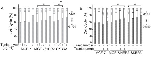 Effects of tunicamycin alone A. and in combination with trastuzumab B. on cell cycle distributions in breast cancer cell lines MCF-7, MCF-7/HER2 and SKBR3.
