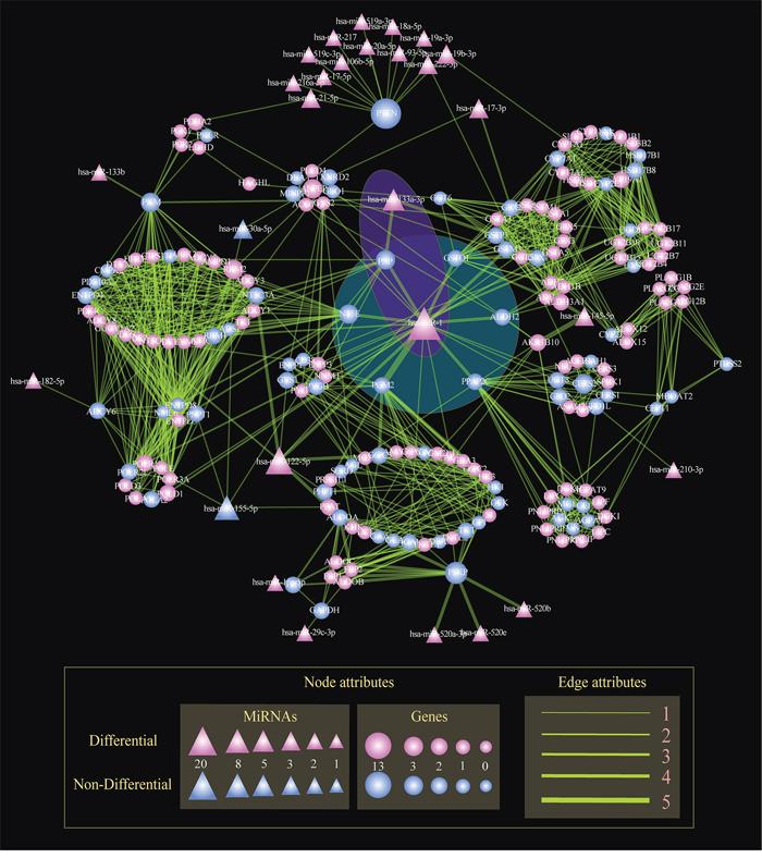The global regulatory network of miRNAs in STAD.