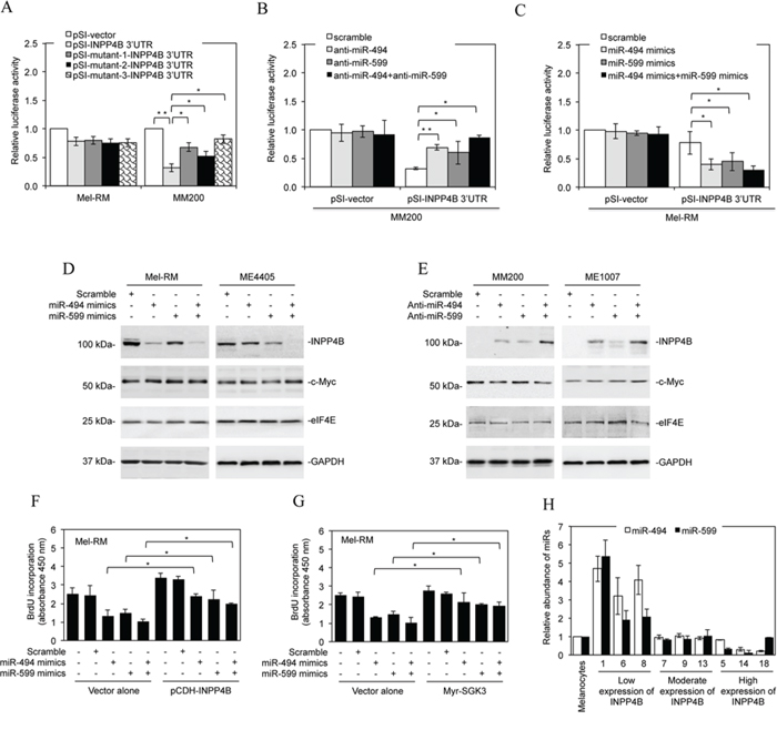 Downregulation of miR-494 and miR-599 contributes to upregulation of INPP4B.