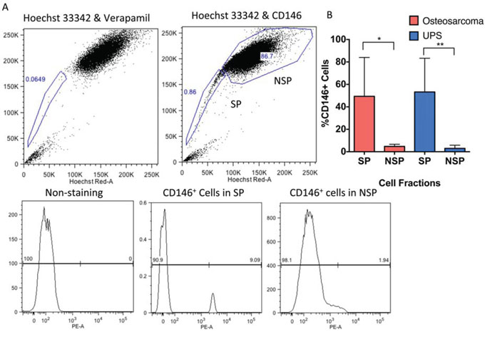 CD146 expression is enriched on the surface of SP cells in human UPS and osteosarcoma.
