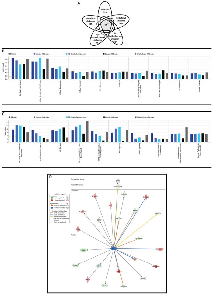 Gene expression profiling of U937 cells upon treatment with shikonin and its derivatives.