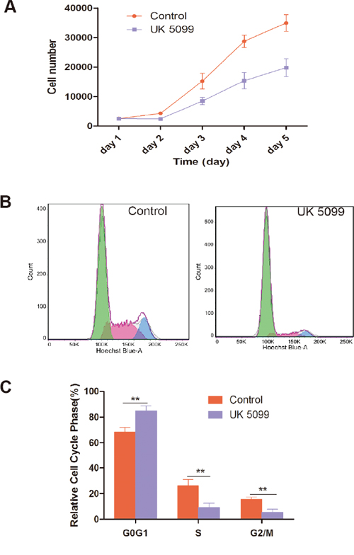 UK5099 inhibited cell proliferation and changed cell cycle.