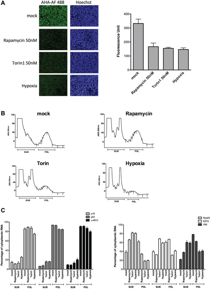 p16 mRNA retains polysomal loading in conditions of global translation inhibition caused by hypoxia or mTOR inhibitors.