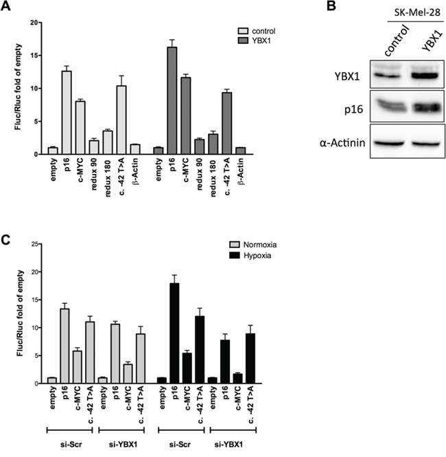 YBX1 controls p16INK4a IRES activity in the bicistronic reporter vector.