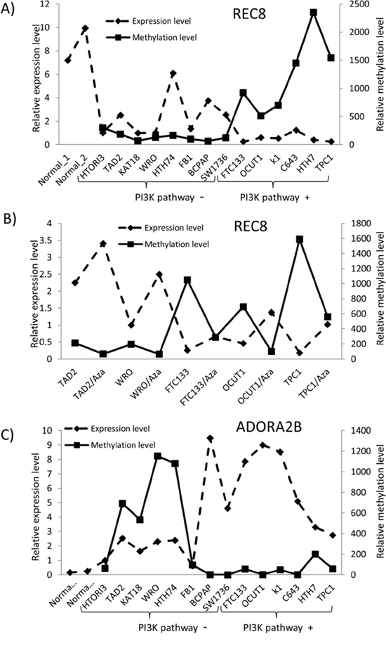 Relationship between the expression and methylation of REC8 and ADORA2B and genetic alterations of PI3K/Akt pathway in thyroid cancer cell lines.
