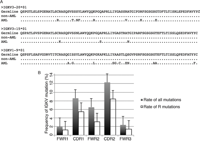 IGKV somatic hypermutation in myeloblasts and mature myeloid cells.