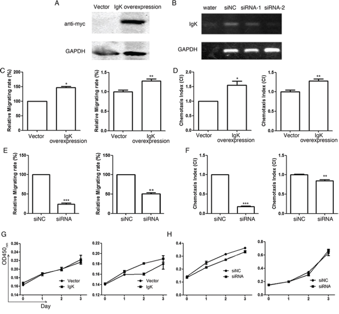 The effect of IGK expression on AML cell migration, chemotaxis and proliferation.