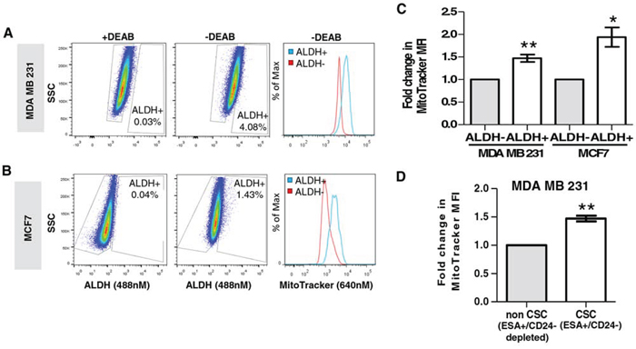Mitochondrial mass directly correlates with ALDH activity and the ESA+CD24-/low CSC population.