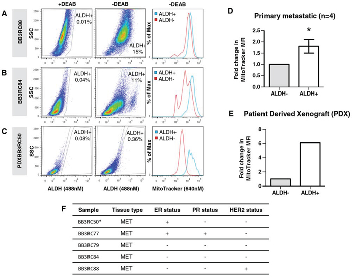 Mitochondrial mass correlates with ALDH activity in primary breast cancer cells isolated from metastatic breast cancer samples and a patient derived xenograft.