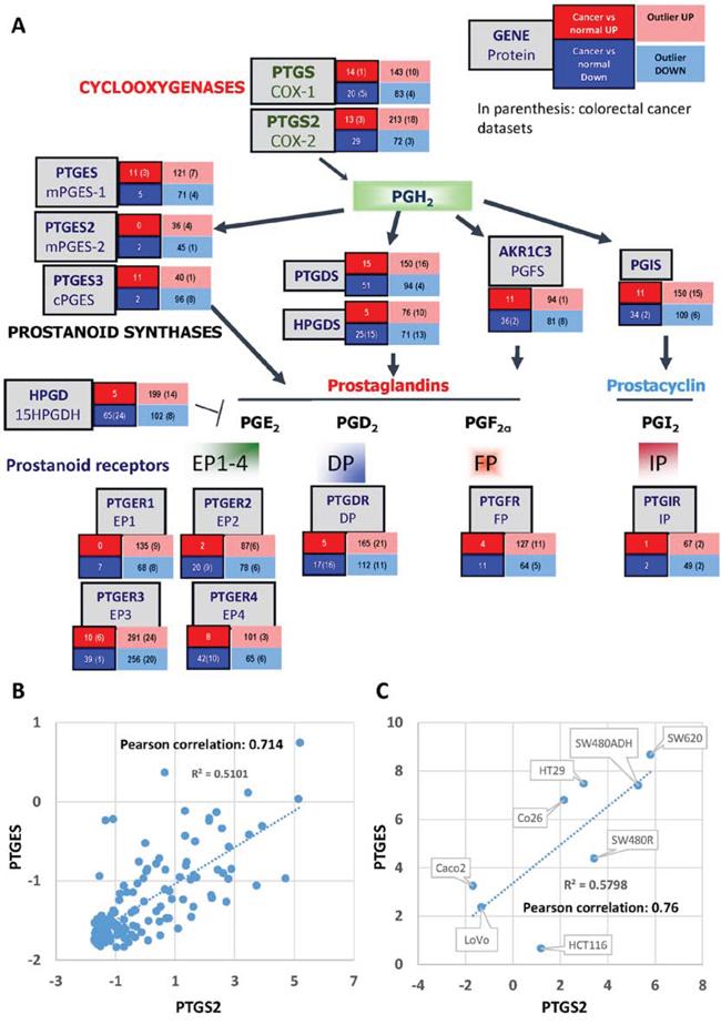 PG Partway gene expression analysis in human tumors.