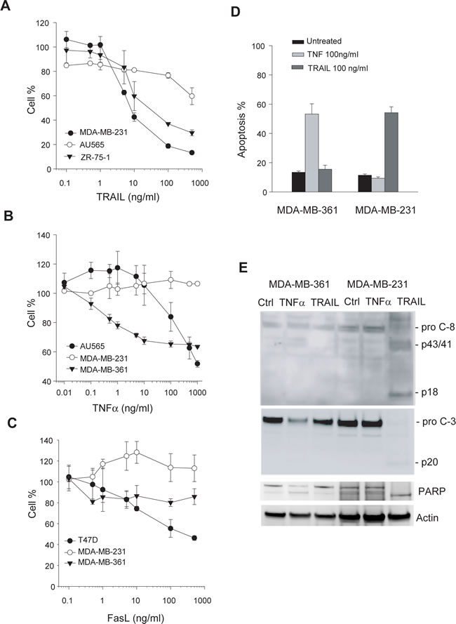 Cellular sensitivity to apoptosis induction by death ligands.