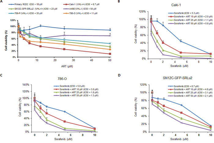Artesunate (ART) decreases the viability of human RCC cells in vitro and enhances the susceptibility of RCC cells to sorafenib.