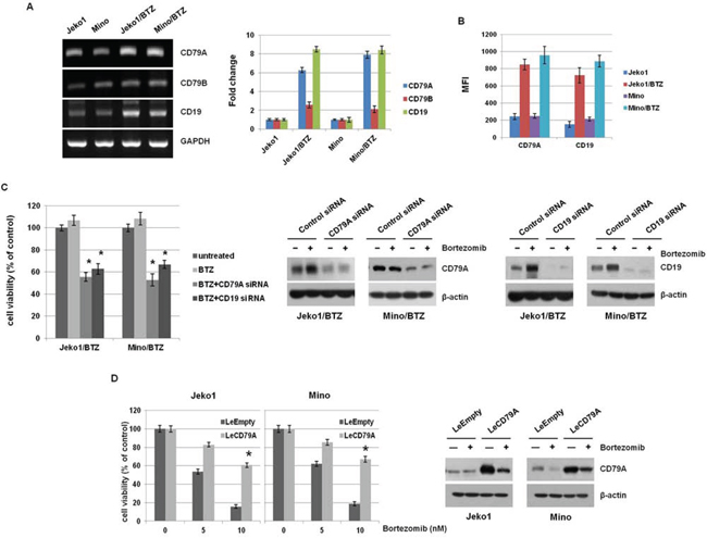 BTZ-resistant MCL cells showed overexpression of CD79A and CD19 level.