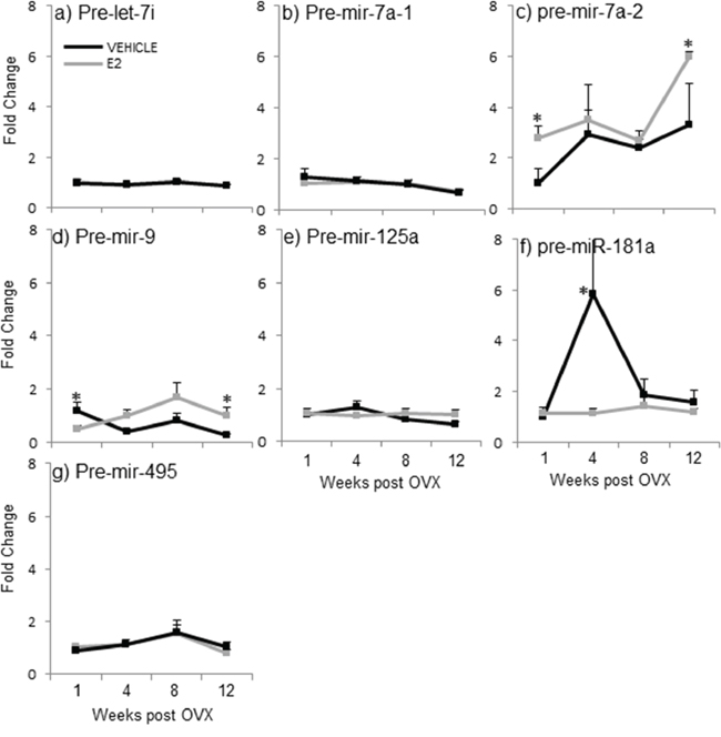 E2 regulation of the precursor miRNA expression in the hypothalamus after increasing lengths of ovarian hormone deprivation.