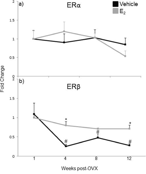 mRNA expression of estrogen receptor isoforms in the hypothalamus after increasing lengths of ovarian hormone deprivation.