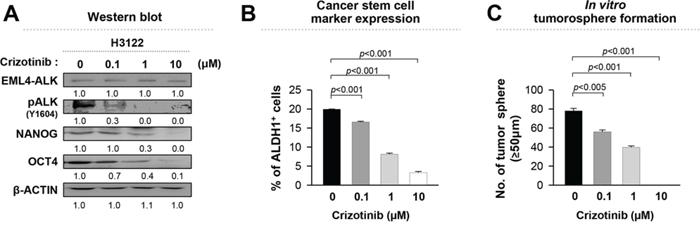 Crizotinib, an ALK inhibitor, reduces the stem-like properties of EML4-ALK positive cells in a dose-dependent manner.