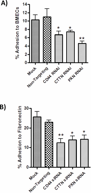 CD44 promoted cytoskeletal signaling mediates adhesion to endothelial monolayers and Fibronectin-enriched matrices.
