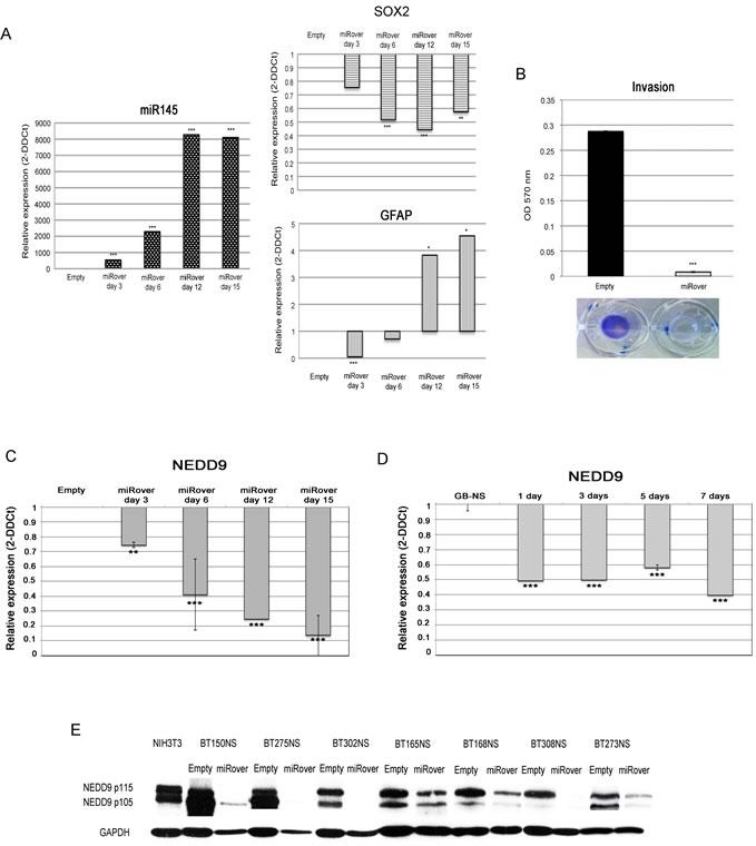 miR-145 in GB stem-like cells.