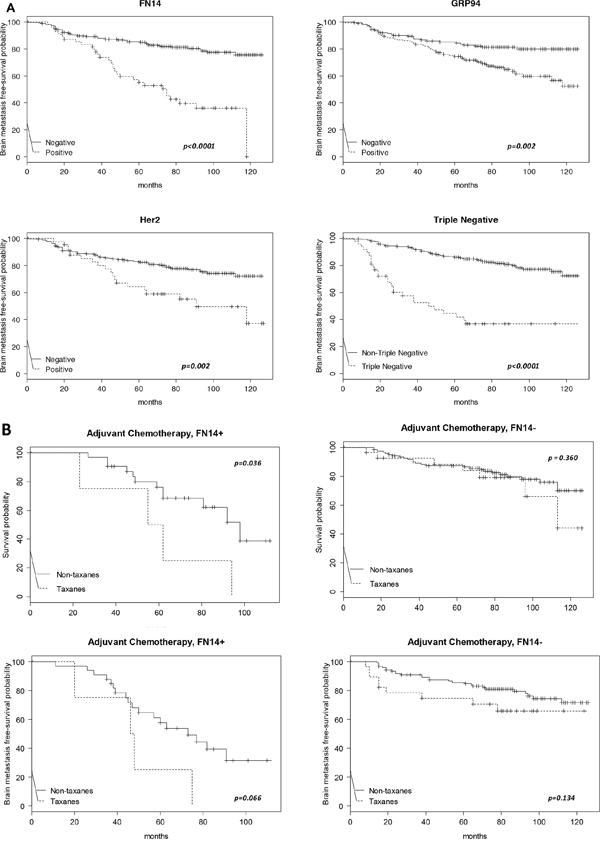 Kaplan-Meier survival estimates of brain metastasis-free survival among patients.